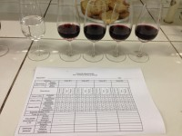 curso anlise vinho 3