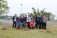 plantio mudas_criciuma2